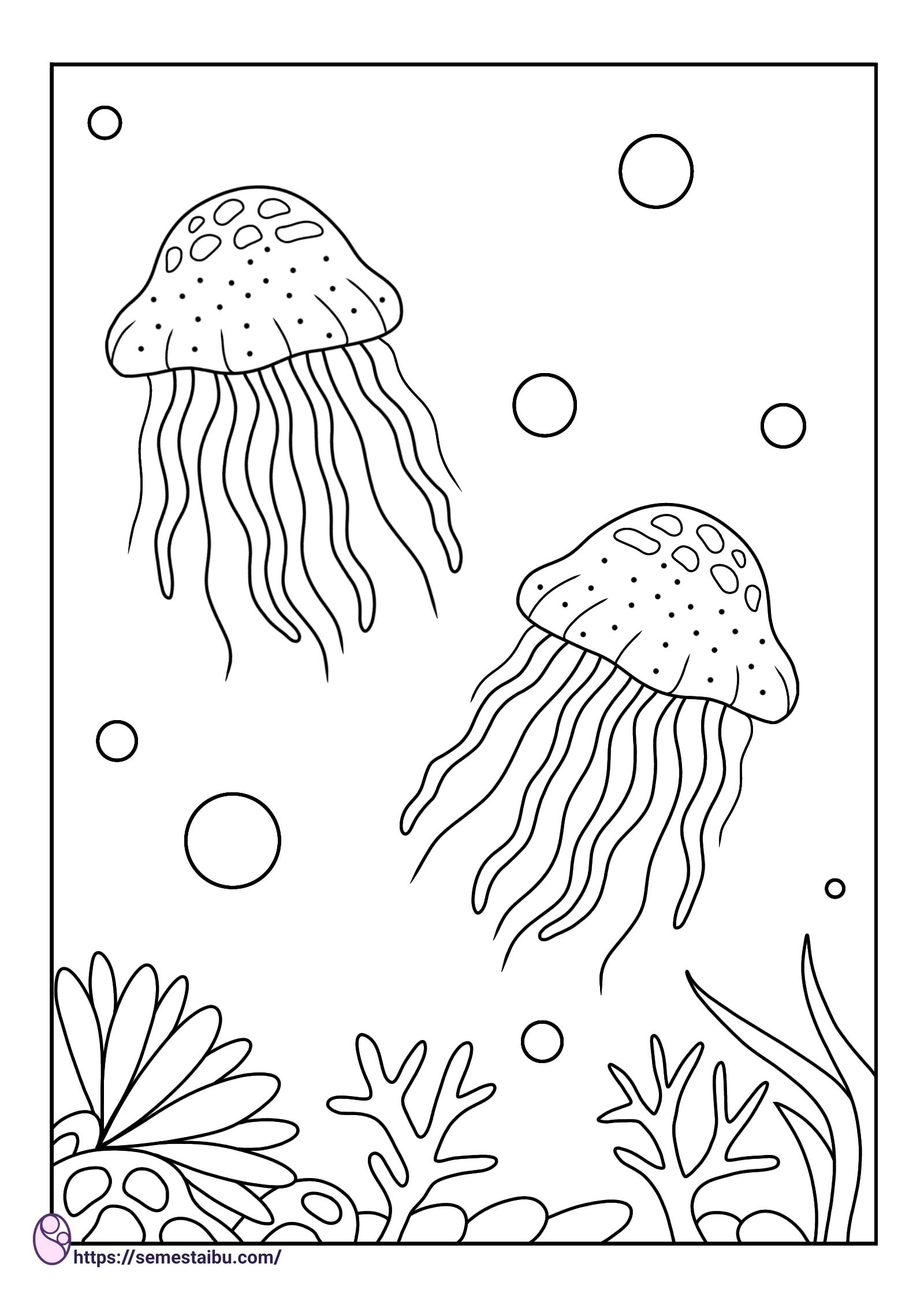 Gambar mewarnai hewan untuk anak tk - ubur ubur