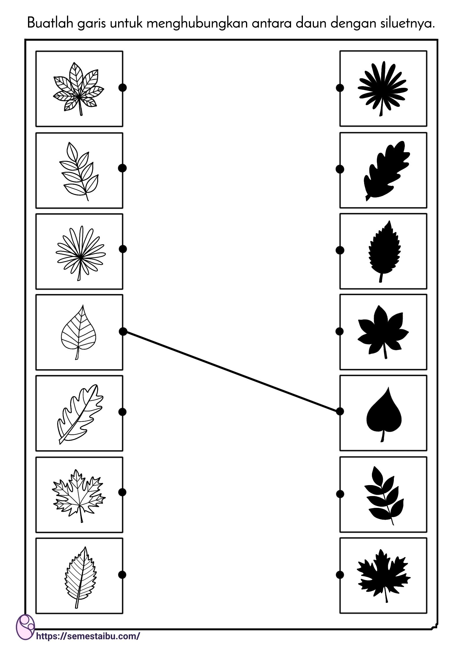 lembar kerja siluet daun - mencocokkan gambar